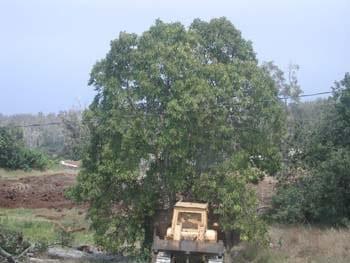bulldozer2-1