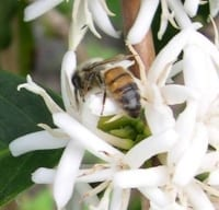 bee_flower_small